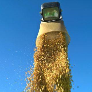 たっぷり収穫でございます。