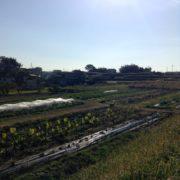 自然農法による米作りを開始します。