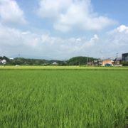 2019年のお米~特別栽培米